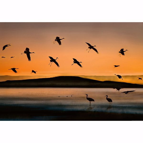 Picture of Birds At Sunset Non Woven Wall Mural
