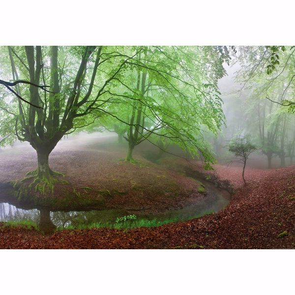 Picture of Foggy Forest Non Woven Wall Mural