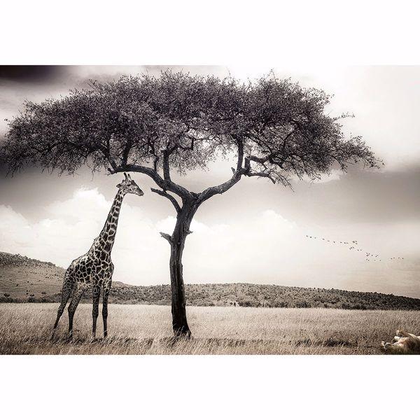 Picture of Giraffe Safari Non Woven Wall Mural