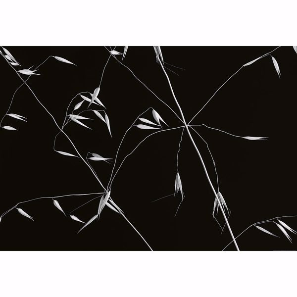 Picture of Abstract Floral Non Woven Wall Mural