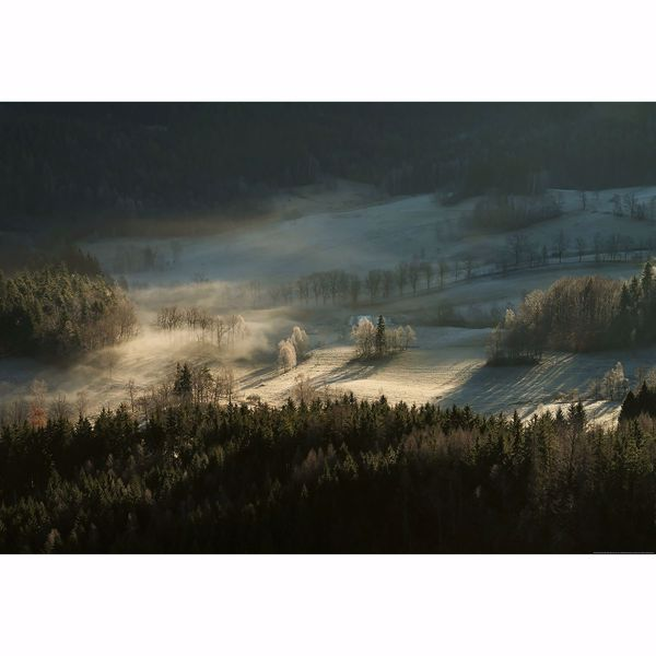 Picture of Frosty Forest With Dew Non Woven Wall Mural