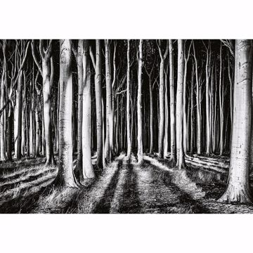 Picture of Ghost Forest Non Woven Wall Mural