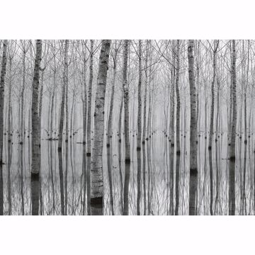 Picture of Birch Forest In The Water Non Woven Wall Mural