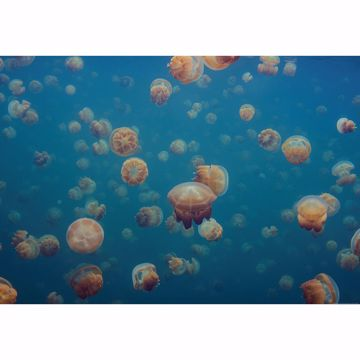 Picture of Jellyfish in the Deep Ocean Non Woven Wall Mural