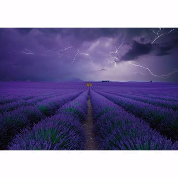 Picture of Field Of Lavender Non Woven Wall Mural