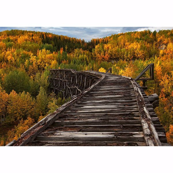 Picture of Bridge In The Forest Non Woven Wall Mural
