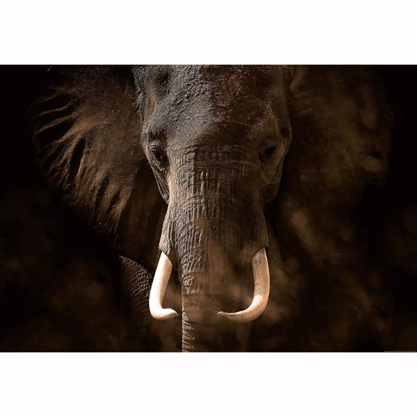 Picture of Elephant Close-Up Non Woven Wall Mural