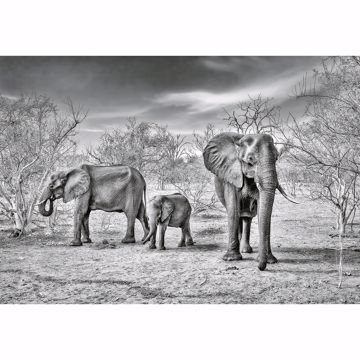 Picture of Elephant Family Non Woven Wall Mural