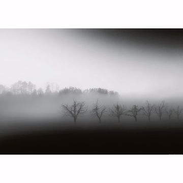 Picture of Foggy Landscape Non Woven Wall Mural