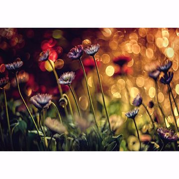 Picture of Flowers And Lights Non Woven Wall Mural