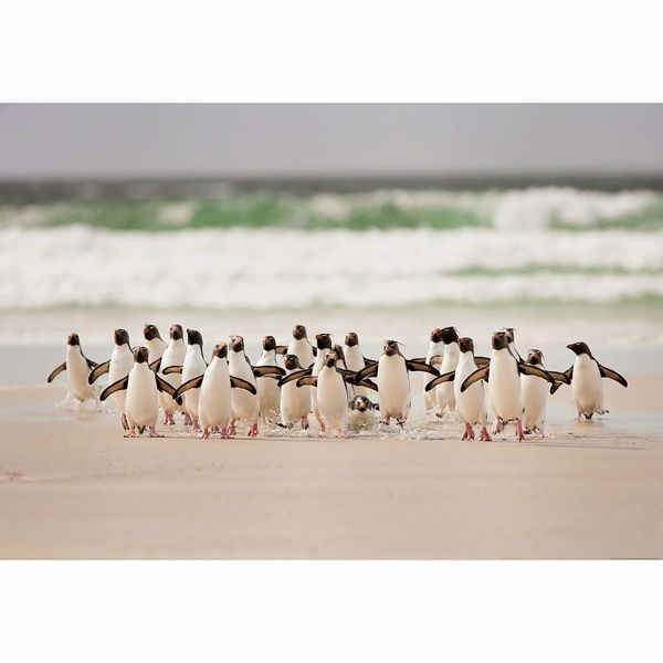 Picture of Penguins Walking Non Woven Wall Mural