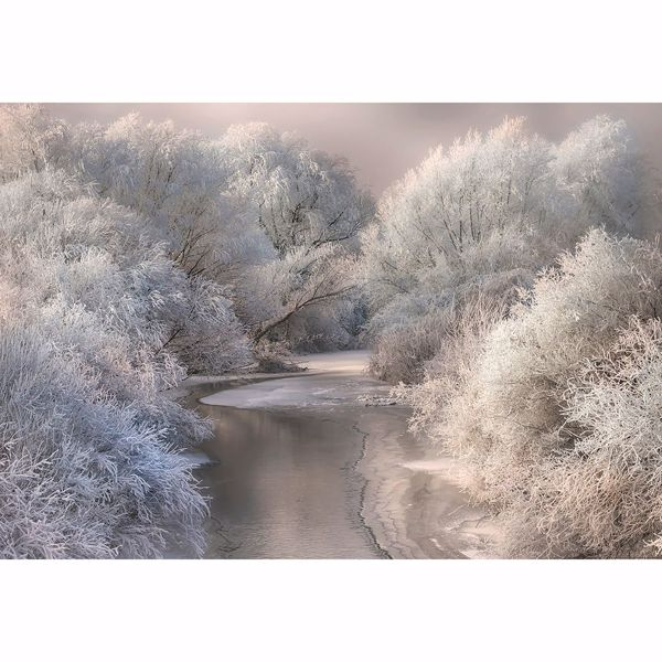 Picture of Frozen Forest Non Woven Wall Mural