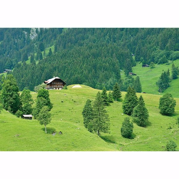 Picture of Swiss Mountains Forest Non Woven Wall Mural