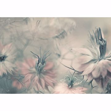 Picture of Nigella Flowers Non Woven Wall Mural