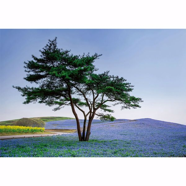 Picture of Tree In Blue Flower Field In Japan Wall Mural