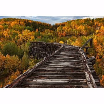 Picture of Bridge In The Forest Wall Mural