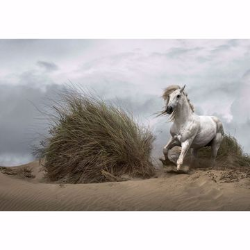 Picture of White Wild Horse Wall Mural