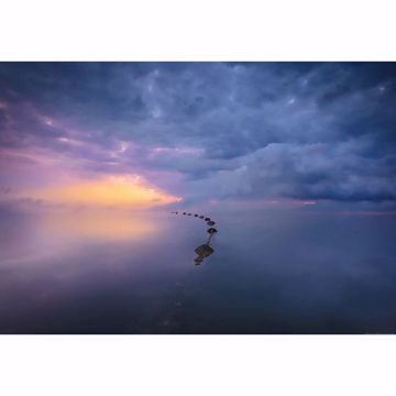 Picture of Wetland Sunrise Wall Mural