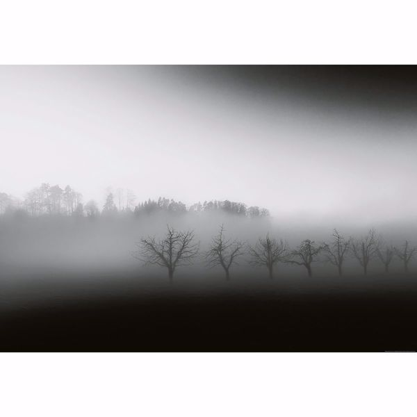 Picture of Foggy Landscape Wall Mural
