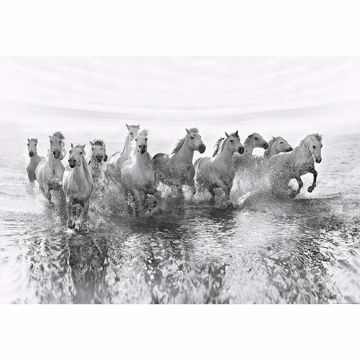 Picture of White Horses Wall Mural