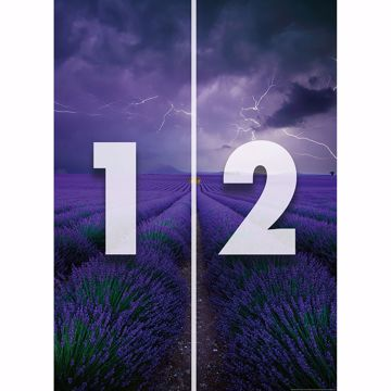 Picture of Field Of Lavender Wall Mural