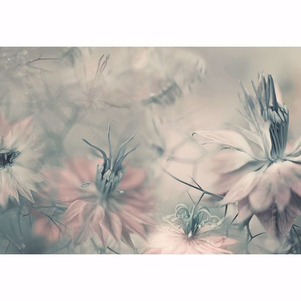 Picture of Nigella Flowers Wall Mural
