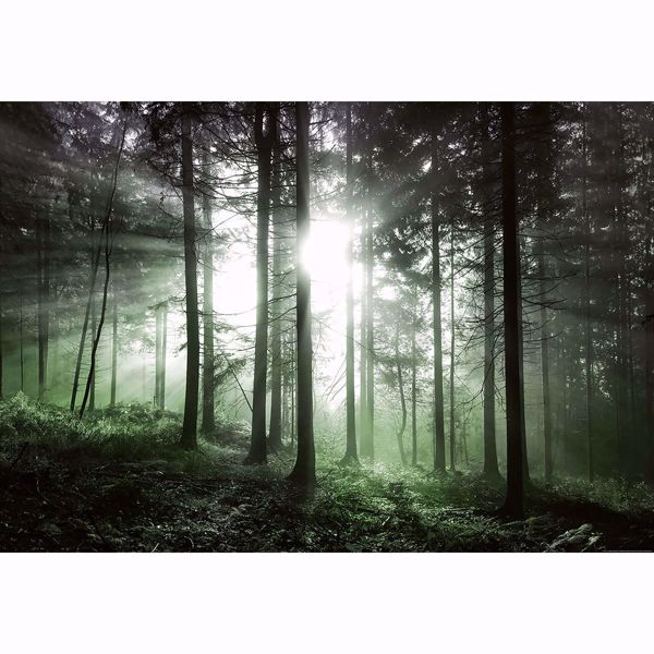 Picture of Sun Rays Wall Mural
