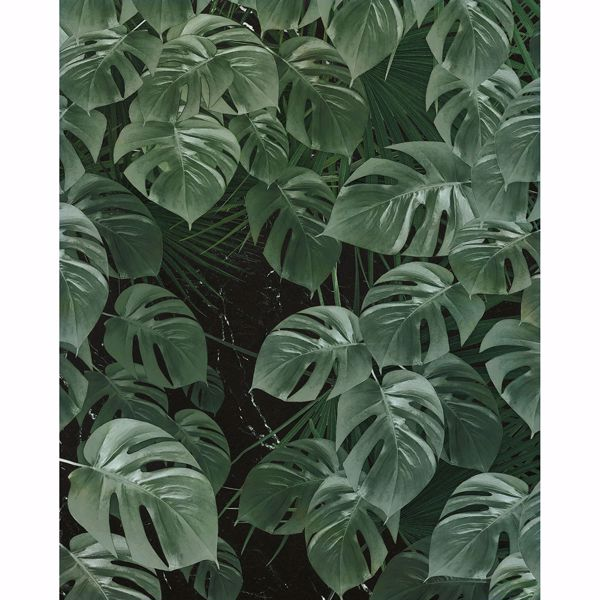 Picture of Monstera Leaf Wall Mural