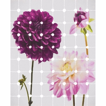 Picture of Flowers & Dots Wall Mural