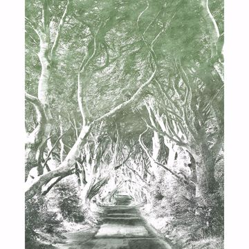 Picture of Graphite Whimsical Trees Wall Mural