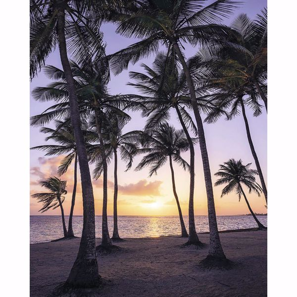 Picture of Palmtrees on Beach Wall Mural