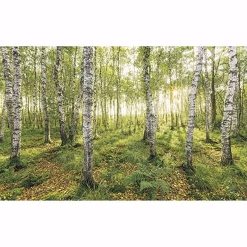 Picture of Birch Trees Wall Mural