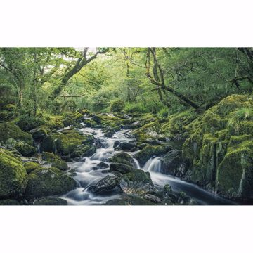 Picture of Green Tales Wall Mural