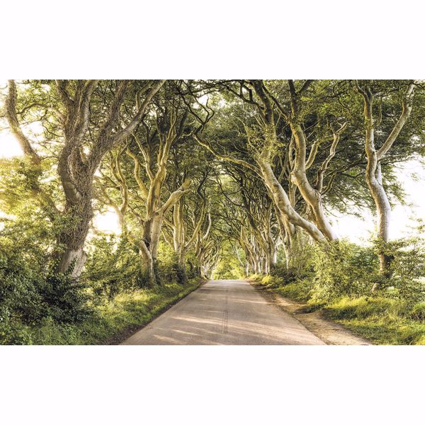 Picture of Golden Hedges Wall Mural