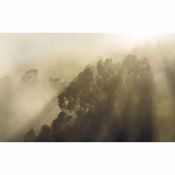 Picture of Misty Mountain Wall Mural