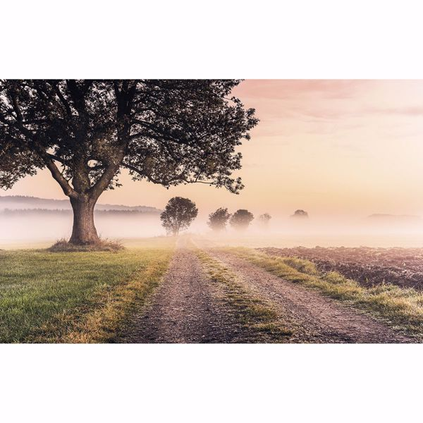 Picture of Misty Morning Wall Mural