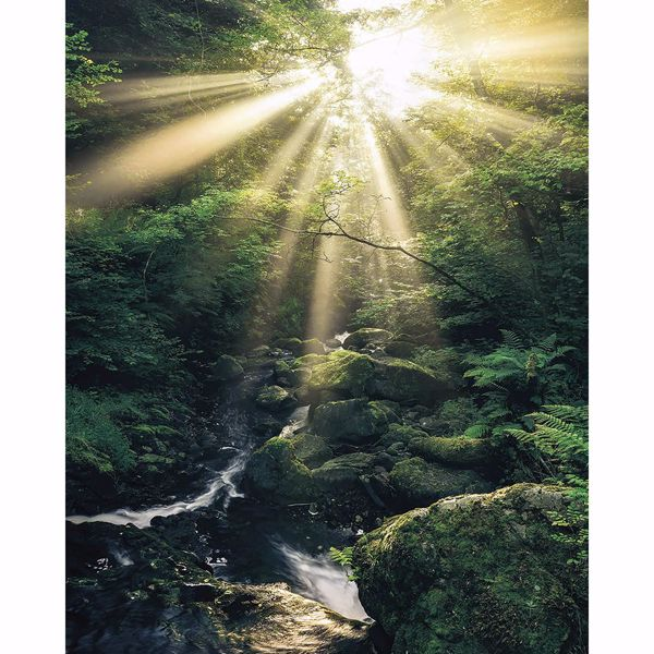 Picture of Jungle Sunrise Wall Mural