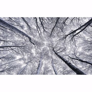 Picture of Frosty Tree Top Wall Mural