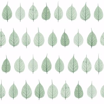Picture of Greenhouse Green Leaves Wallpaper