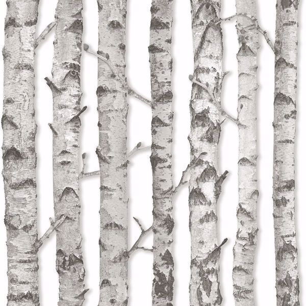 Picture of Merman Light Grey Birch Tree Wallpaper