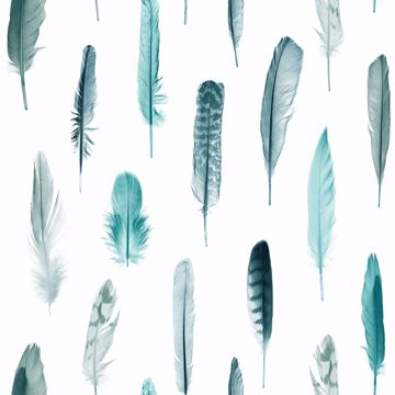 Picture of Nala Turquoise Feathers Wallpaper