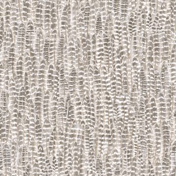Picture of Identity Light Brown Feathers Wallpaper