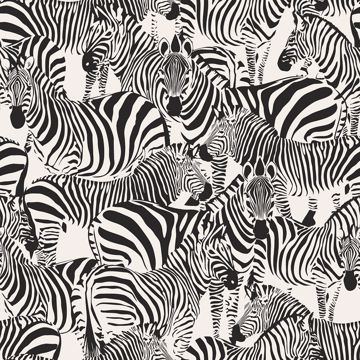 Picture of Jemima Black Zebra Wallpaper