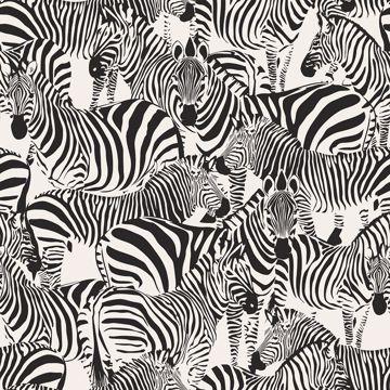 Picture of Jemima Black Zebra Wallpaper