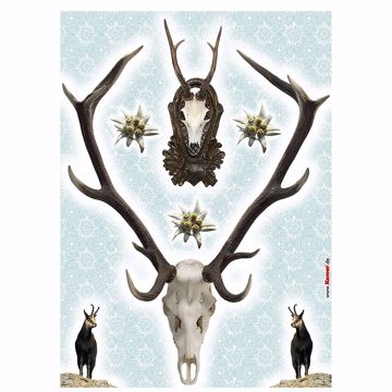 Picture of Holadiho Wall Decals