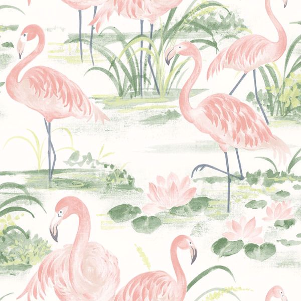 Picture of Everglades Coral Flamingos Wallpaper