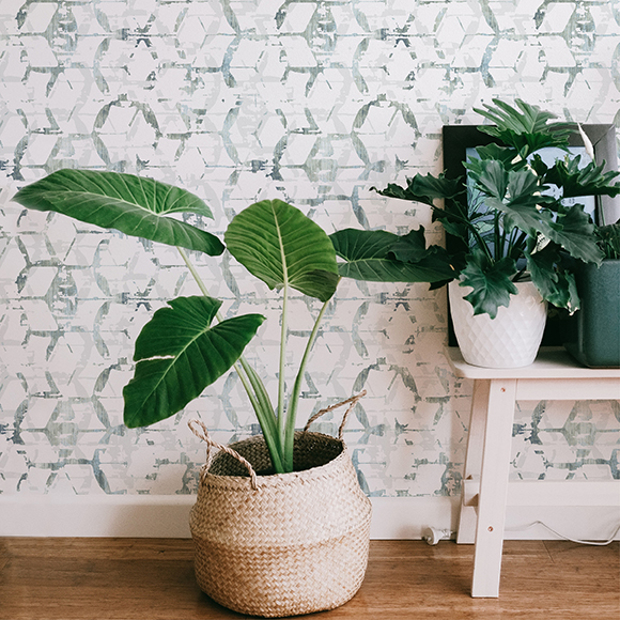 The Unexpected Influence of Tropical Plants in Interior Design