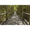 Picture of Mangrove Forest Wall Mural