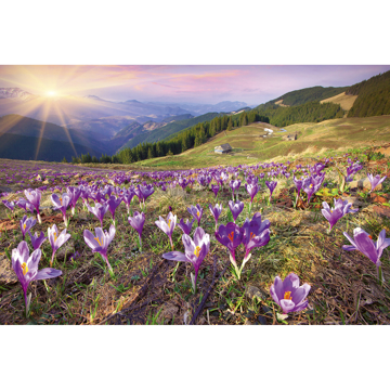 Picture of Crocuses at Spring Wall Mural