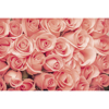 Picture of Roses Wall Mural